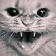 Playcat2000