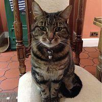 Morrisseys_cat